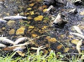 Ecologistas en Acción pide que se eviten desastres ecológicos como el del río Argutorio (24/10/09).